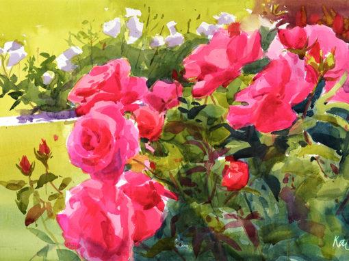 Farmleigh Roses